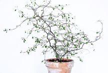 Carokia Plants / Green living minimalistic