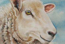 Country: Sheep