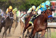 Race Horses / RUN RUN RUN