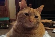 Our little ginger Ernie / At home with Ernie