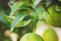 Nel frutteto | In my orchard
