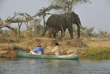 Sambia / Sambia - eines der schönsten Ziele für einen Safari Urlaub. Und als fulminanter Abschluss - die Viktoria Fälle.