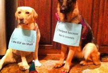 Dog Shaming  / by Lynn Spaulding