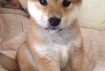Koiranpennut