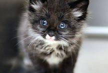 Kedimm