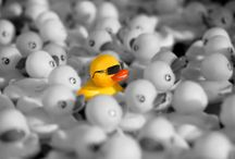Ducks in sunglasses / My marketing literature shows a yellow duck in sunglasses surrounded by a sea of grey- it's about helping people stand out in a crowd. So of course I had to do this #rubberduckies board!