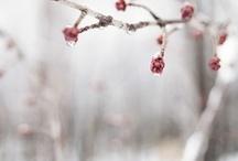 Sníh - Snow