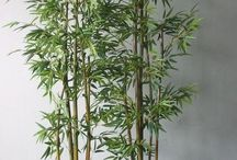 bamboo in pots