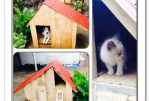 Dog house / For cats and dog