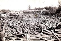 MN Logging