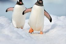PENGUINS / by Angie Guzher