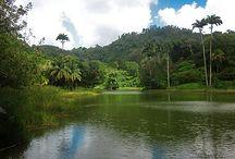 Lake Palmiste