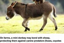 Loveable Donks