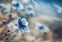 Bloemen enzovoorts