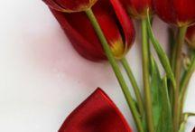 Couleur - Rouge flamboyant