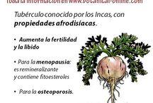 Verduras y propiedades.