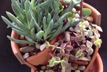 Broken Flower Pot Ideas