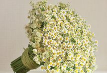 Chamomile or Feverfew Wedding Flowers / Great ideas for using Chamomile or Feverfew (two different flowers that look alike!) in wedding flowers.  Learn how to make bridal bouquets, wrist corsages, groom boutonnieres, reception table centerpieces and church flower decorations.  Buy wholesale fresh flowers and discount florist supplies.