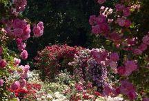 roses-güller