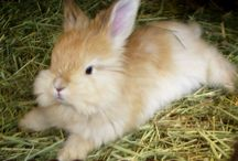 All things Bunny!