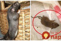 proti myším