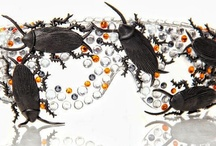 Interesting Inspex-i-cide- Shades / Fashion Eyewear and Sunglasses that feature insects and butterflies and spiders Oh MY!