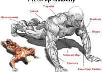 Trim anatomi