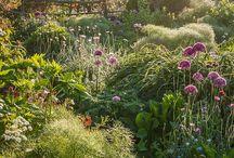 Красивые сады