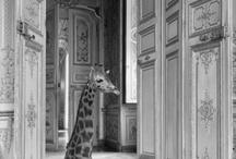 Arte en animales