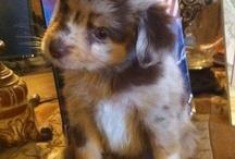 Lily's Future Puppy