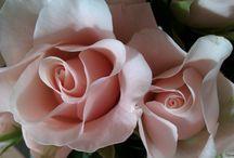 Flowers flowers flowers / Flowers are beautiful and makes you happy