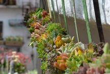Succulents garden ideas