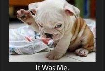 Funny pups