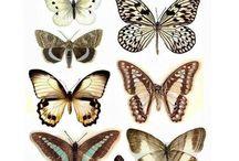 dekoracje z motyli