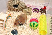 Homeschool Unit Study: Hamsters