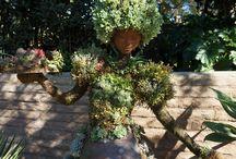 Garden / by Donna Padgett