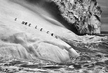 """Sebastião Salgado: Genesis / Genesis follows """"Workers"""" (1993) and """"Migrations"""" (2000) as Salgado's third major long-term project. Whereas his first two projects documented human plight across the globe, """"Genesis"""", shot over eight years from 2004, aimed to capture the few remaining environments untouched by human hands. This task took the photographer to over thirty countries including Siberia, Papua New Guinea, Alaska and The Galápagos."""
