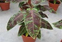 Plantas_Paisagismo