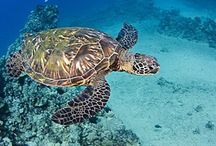 Beautiful creatures of the ocean