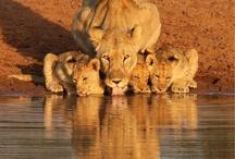 Una hermosa madre junto a sus hermosos hijos cachorros