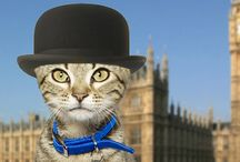 Purr Minister 2014 / Vote in our inaugeral election to find the top cat of Westminster to be crowned Purr Minister 2014.