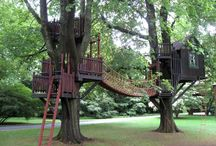 Treehouse / by Rachel Collier