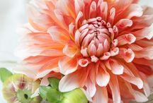 Hochzeit • Koralle / Orange Hochzeitsfarben / Hochzeitsfarbe Koralle und Orange. Eine erfrischende Inspiration.