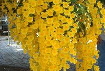 Plantas / Flores