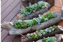 hobby planten