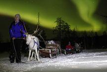 Excursions & Safaris. Salla, Finland, Lapland