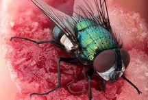 Insecten en kleur contrasten