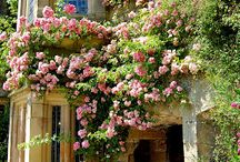 Gardens & Flowers ~