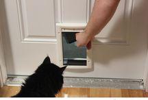 кошачья дверь
