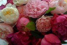 Цветочки  :-)